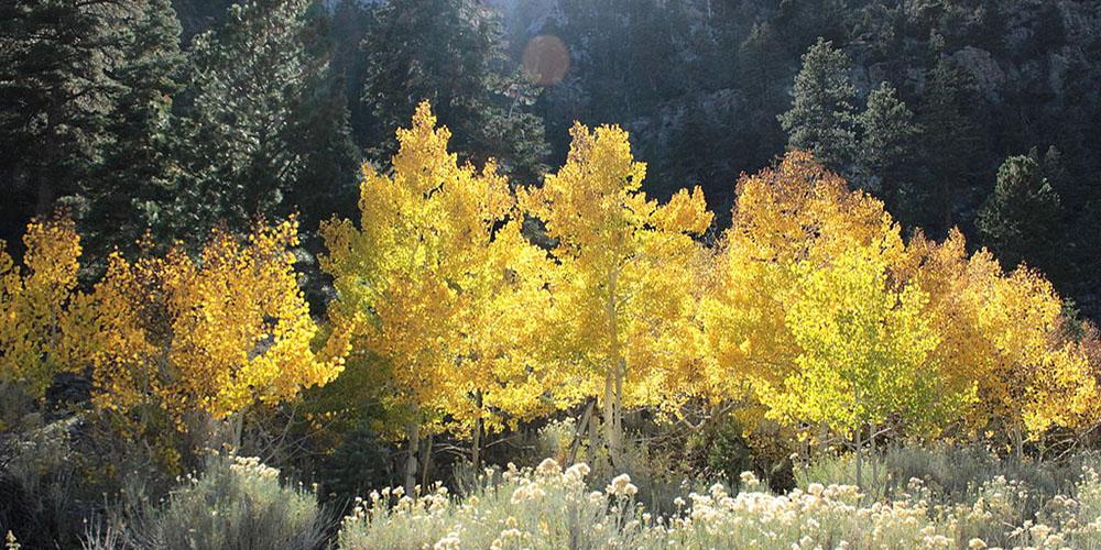 fall-aspen-viewing-1