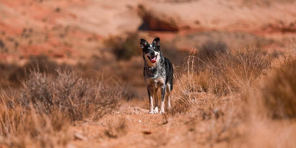 dog-bite-claims-2